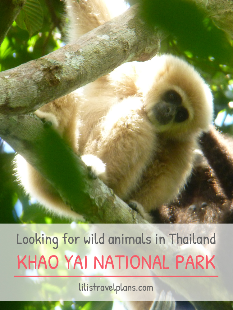 LOOKING FOR MONKEYS AND ELEPHANTS IN THE WILD – Khao Yai National Park, Thailand thumbnail