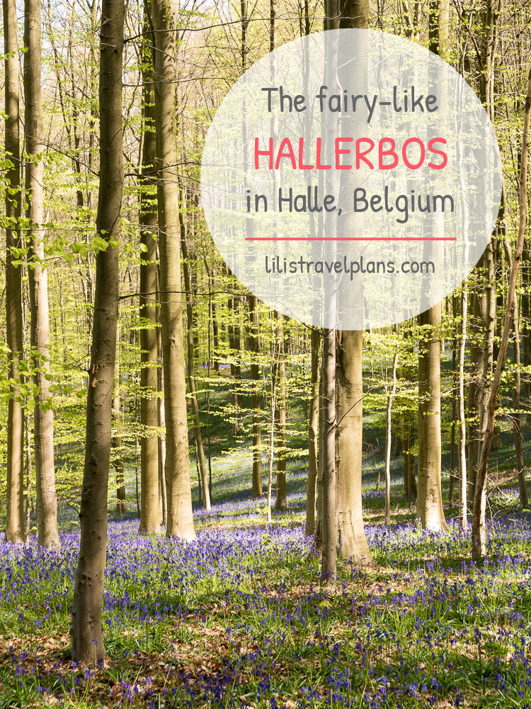 The fairy-like Hallerbos, Halle, Belgium