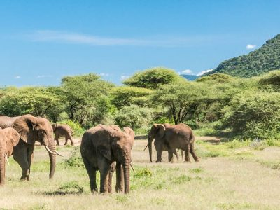 IN PHOTOS: A SAFARI IN TANZANIA – Lake Manyara National Park