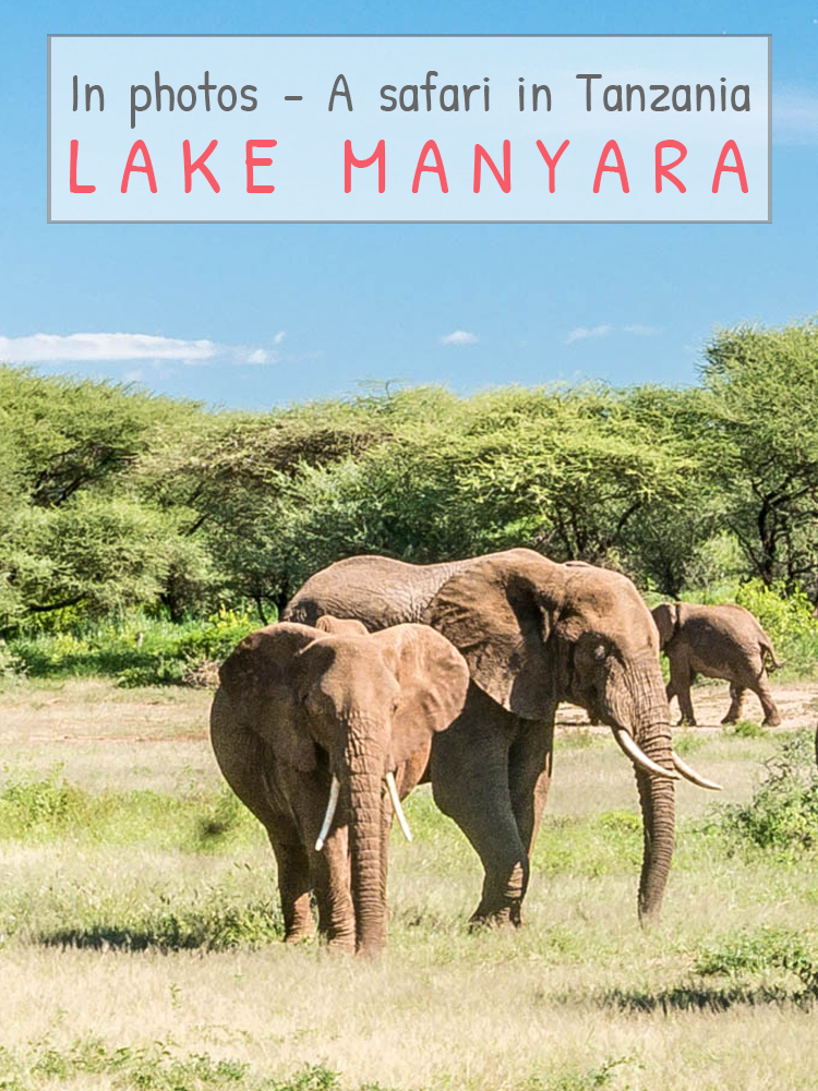 Photo guide – A safari in Tanzania – Lake Manyara National Park