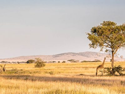 IN PHOTOS: CAN YOU FEEL THE LOVE TONIGHT – A safari in Serengeti National Park, Tanzania